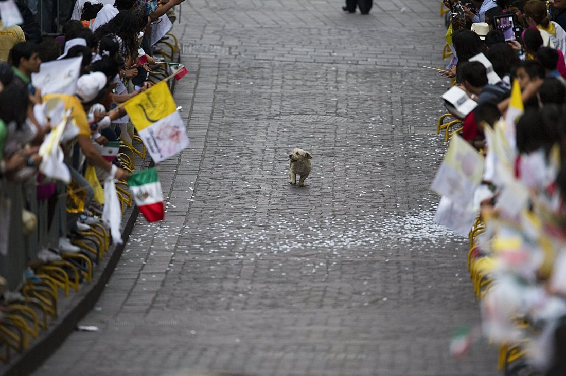 Dog-Thinks-Parade-All-Him